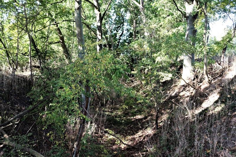 Unter Büschen und Bäumen erkannt man noch die Schlucht, die für die Schienem der Lorenbahn ausgehoben wurde.