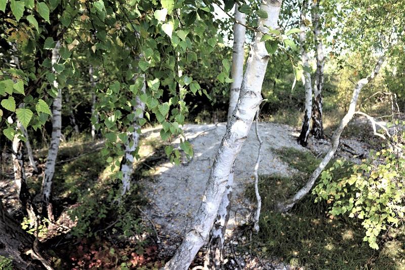 Kleines Idyll: Hier liegt an der Kuppe des Mühlenbergs noch der blanke Kalk.
