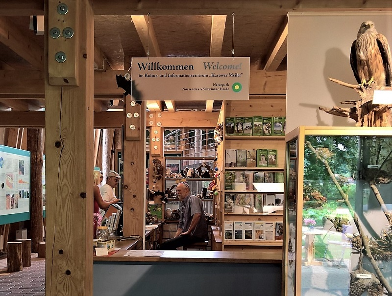 Auf dem Damerower Werder können Naturfreunde Wisente aus nächster Nähe beobachten. Foto: Archiv Nordkurier