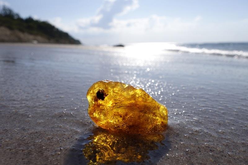 Im Herbst und Winter wird das Gold der Ostsee besonders oft an Land gespült.